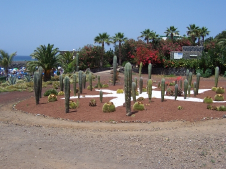 Playa Jardin Cactus